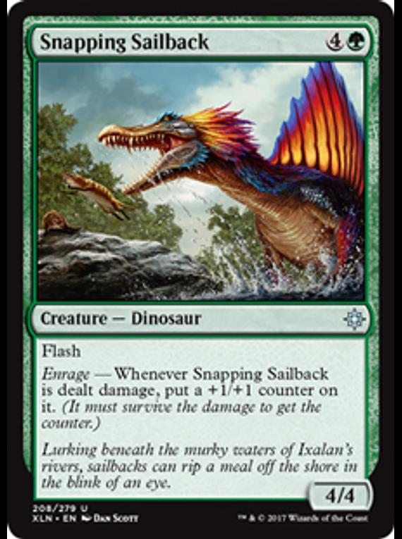 Snapping Sailback - XLN