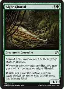 Algae Gharial - MM15