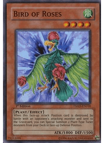 Bird of Roses - TSHD-EN018 - Super Rare (español)