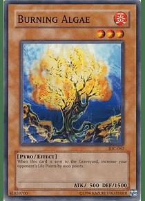 Burning Algae - IOC-062 - Common