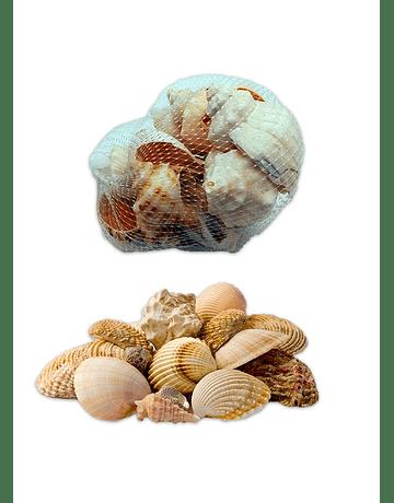 Conchitas de Mar 100 gms  JI19-284
