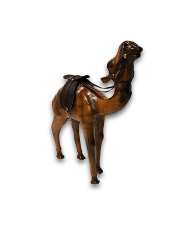 Camello de Cuero 12