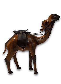 "Camello de Cuero 12"""
