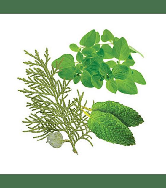 Óleo Essencial AromaTouch - 15 ml | Mistura de Massagem
