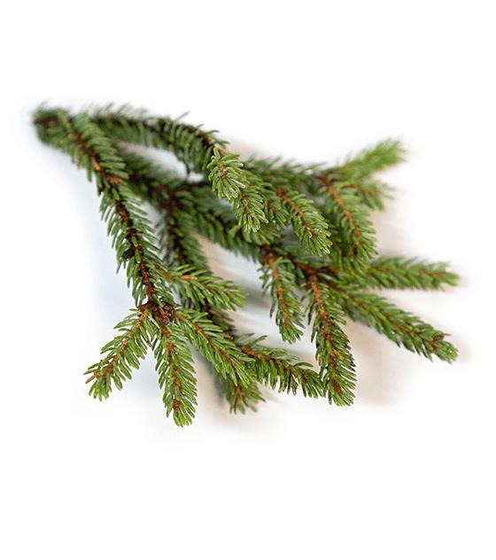 Óleo Essencial Black Spruce (Abeto Negro) - 5 ml