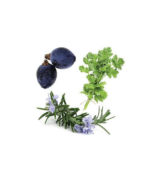 Óleo Essencial Zendocrine - 15 ml | Mistura Restauradora