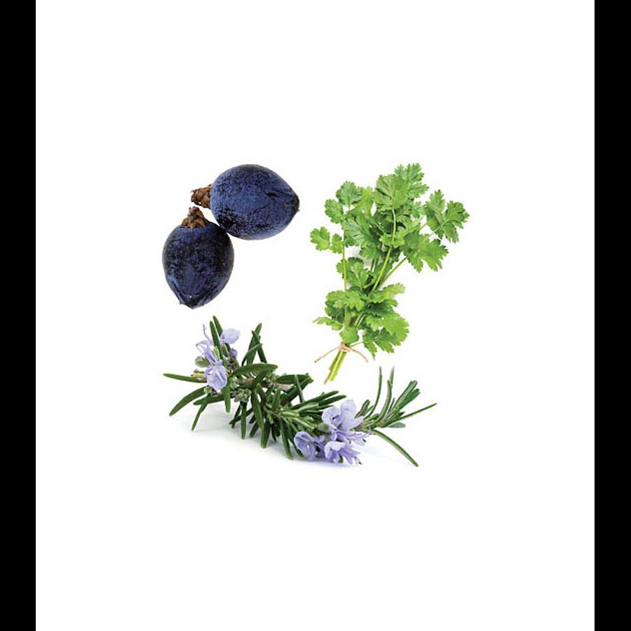 Óleo Essencial Zendocrine - 15 ml   Mistura Restauradora