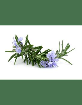Óleo Essencial de Rosemary (Alecrim) - 15 ml