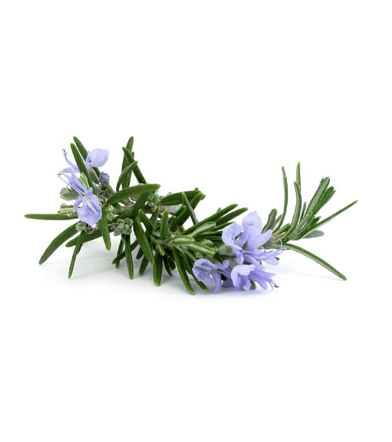Óleo Essencial de Rosemary (Alecrim) - 15 ml