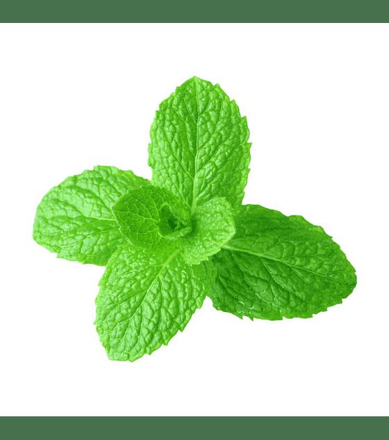 Óleo Essencial de Spearmint (Hortelã-Comum) - 15 ml