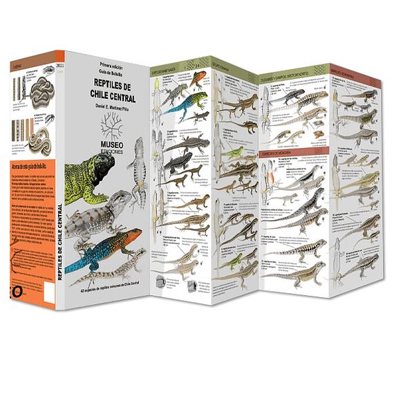 Guía de Campo Reptiles de Chile Central- Image 2