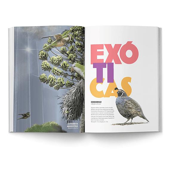 De Chincol a Jote: 200 Aves Chilenas Imprescindibles- Image 2