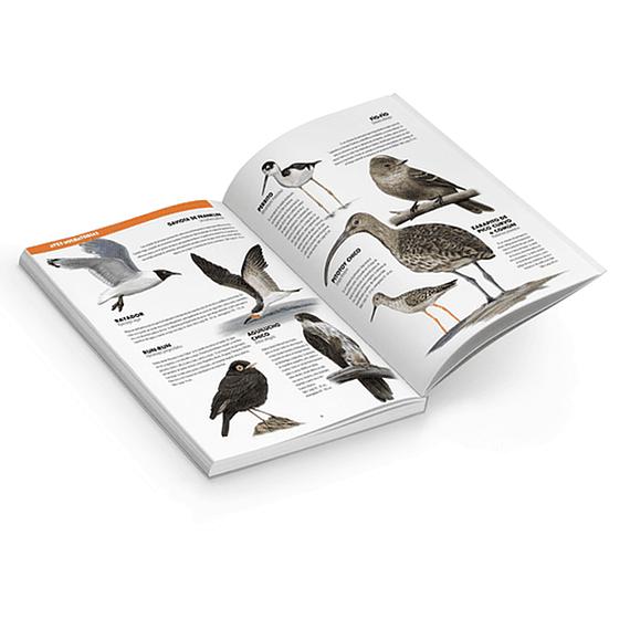 De Chincol a Jote: 200 Aves Chilenas Imprescindibles- Image 4