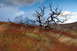Torres del Paine - imagen galería 5
