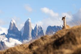 Torres del Paine - imagen galería 12