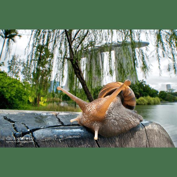 Lente Laowa 15mm f/4 1X Wide Angle Macro con SHIFT para Canon, Nikon y otros- Image 6
