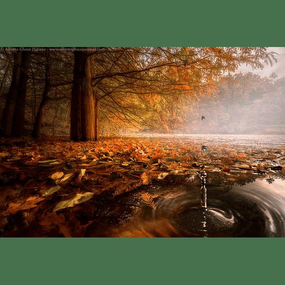 Lente Laowa 15mm f/4 1X Wide Angle Macro con SHIFT para Canon, Nikon y otros- Image 8