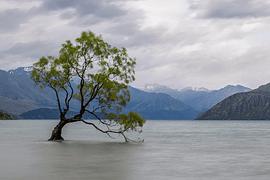 Otoño en Nueva Zelanda - imagen galería 7