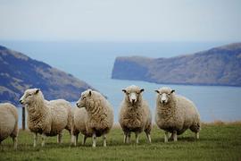 Primavera en Nueva Zelanda - imagen galería 10