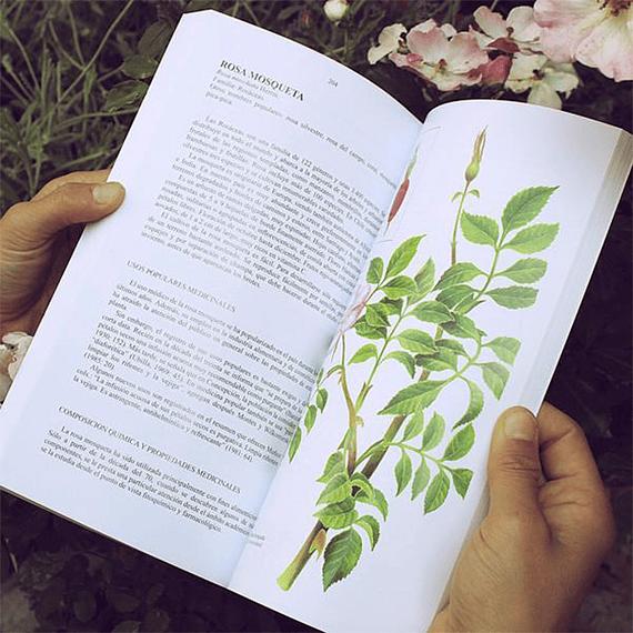 Flora Silvestre de Chile Zona Central- Image 2