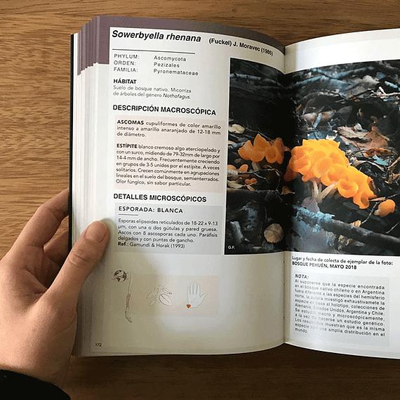 Guía de Campo Hongos de Chile Volumen II- Image 3