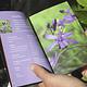 50 Flores Nativas Zona Central de Chile - Image 2