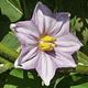 50 Flores Nativas Zona Central de Chile - Image 3