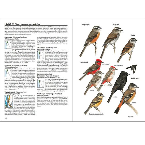 Aves de Chile- Image 2