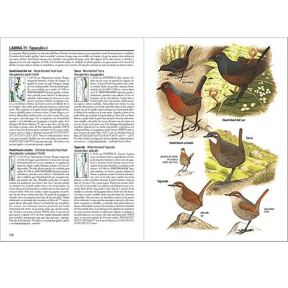Aves de Chile- Image 3