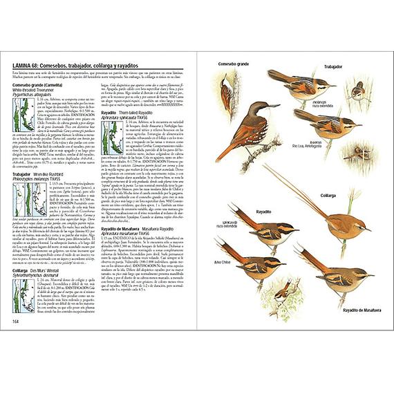 Aves de Chile- Image 4
