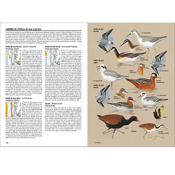 Aves de Chile- Image 6
