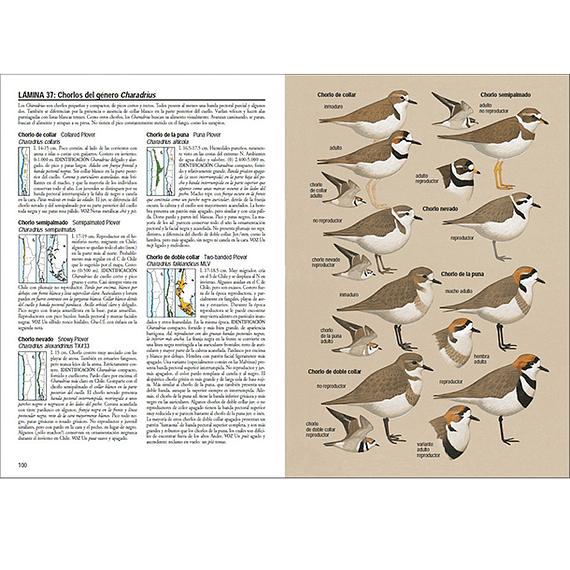 Aves de Chile- Image 7