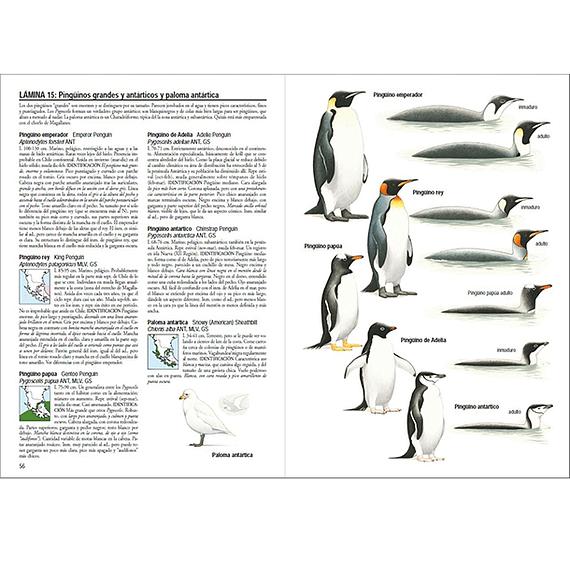 Aves de Chile- Image 8