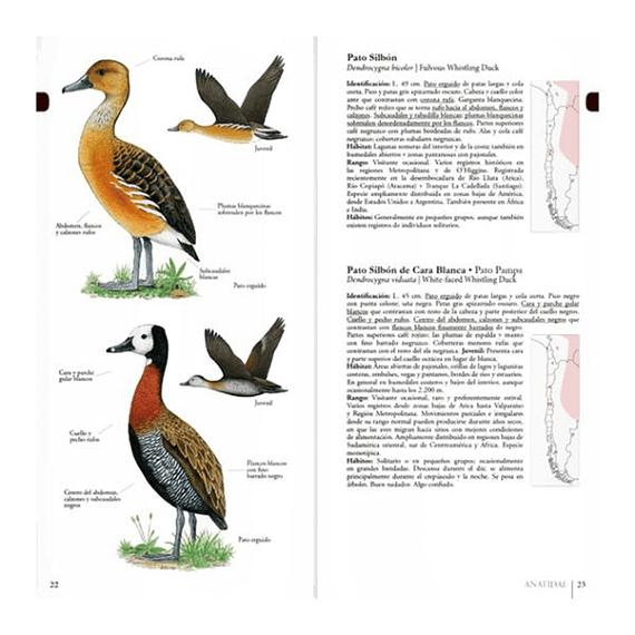 Aves de Chile Guía de Campo Ilustrada- Image 3