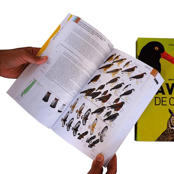 Aves de Chile: Guía de Campo y Breve Historia Natural- Image 3
