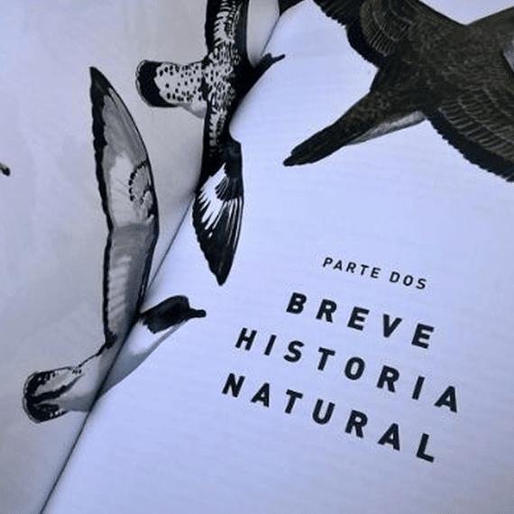 Aves de Chile: Guía de Campo y Breve Historia Natural- Image 4