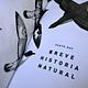 Aves de Chile: Guía de Campo y Breve Historia Natural - Image 4