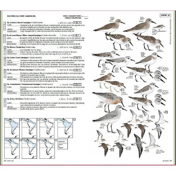 Aves de Chile: Guía de Campo y Breve Historia Natural- Image 5