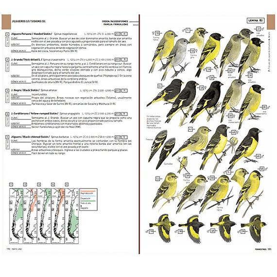 Aves de Chile: Guía de Campo y Breve Historia Natural- Image 6