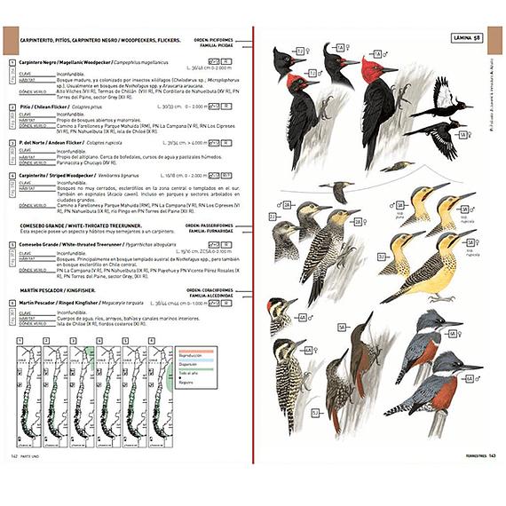 Aves de Chile: Guía de Campo y Breve Historia Natural- Image 7