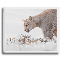 Libro Torres del Paine