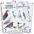 Guia de Campo Aves de Chlie Pack 4 Unidades