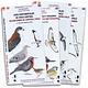 Guia de Campo Aves de Chlie Pack 4 Unidades - Image 1