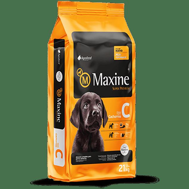 Maxine Cachorro 21 kilos