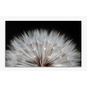 Quadro Metacrilato Flourish - Alteração de valores por medidas