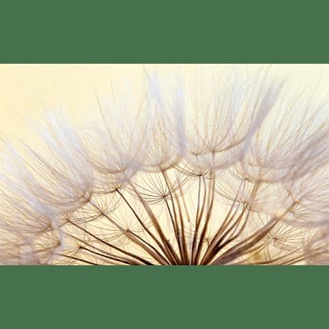 Quadro Metacrilato Fairytale - Alteração de valores por medidas