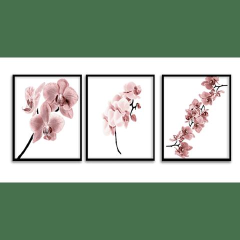Conjunto de Quadros Separados Flores Singelas - Alteração de valores por medidas
