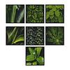 Conjunto de Quadros Separados Be Green - Alteração de valores por medidas