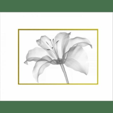 Quadro Flor Raio X - Alteração de valores por medidas