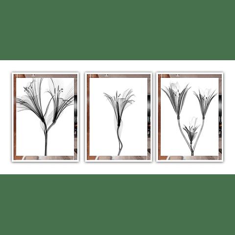 Trio de Quadros Queen  - Alteração de valores por medidas